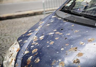 Kako da uklonite ptičji izmet sa automobila